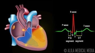 getlinkyoutube.com-Cardiac Conduction System and Understanding ECG, Animation.