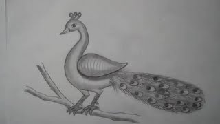getlinkyoutube.com-Drawing of a peacock