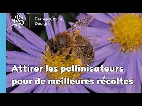PERMACULTURE : Obtenez de meilleures récoltes en attirant les pollinisateurs !