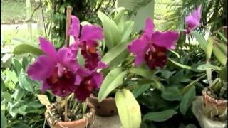 getlinkyoutube.com-Rio de Janeiro street view - orquideas - orchids - colors