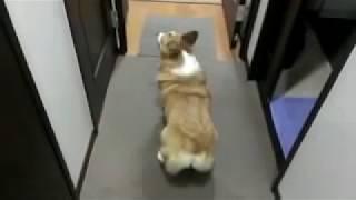 Rihana biggest fan .Dog shaking ass like Rihana!! width=