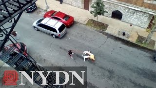 getlinkyoutube.com-WARNING GRAPHIC: Woman orders pit bulls to attack man in Bronx