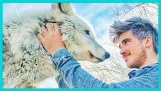 getlinkyoutube.com-PLAYING WITH A REAL WOLF!
