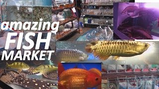 getlinkyoutube.com-Aquarium Fish Market in Bangkok Thailand. WOW!!!