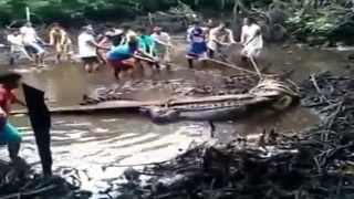 getlinkyoutube.com-คลิปสดวินาที! ชาวฟิลิปปินส์จับจระเข้ยักษ์