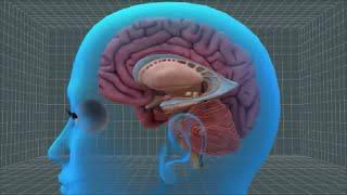 getlinkyoutube.com-Overcoming Stress, Anxiety, and Depression Holistically; Part 3: Balanced Brain Chemistry