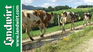 Weide Triebwege für Rinder richtig anlegen | landwirt.com