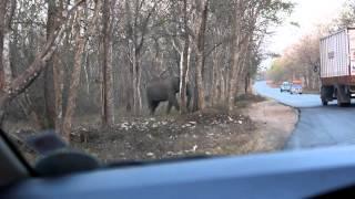 getlinkyoutube.com-Elephant Attack