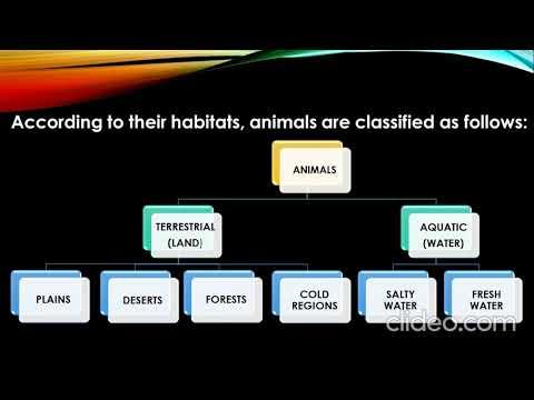 CLASS 3 CH 5 ANIMALS PART 1
