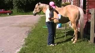 getlinkyoutube.com-Sheath cleaning tips on horses!