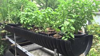 DIY Hydroponics with Homemade Plant Food in the Biogarden