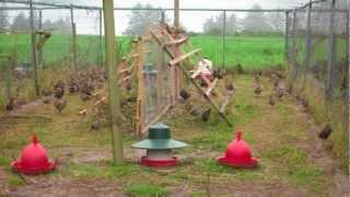 getlinkyoutube.com-Open top Pheasant release pens