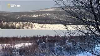 getlinkyoutube.com-وثائقي | براري شمال اوروبا: الحياة الغاضبة HD