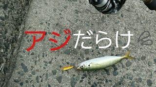 getlinkyoutube.com-[激熱アジング]ナブラ映像!初夏はジグを投げれば釣れる!第一段