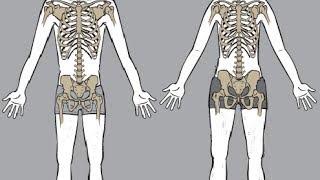 getlinkyoutube.com-Bodybuilding Genetics?