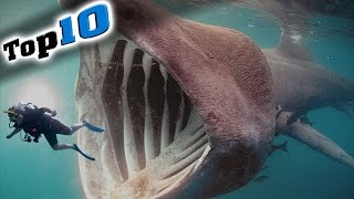 Top 10 Most Dangerous Animals in the World!