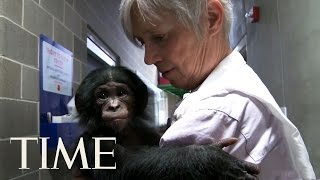 getlinkyoutube.com-Bonobos: One Of Humankind's Closest Relatives & What They Can Teach Us | TIME