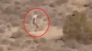 getlinkyoutube.com-5 Mysterious Creatures Caught On Camera & Spotted In Real Life! #2
