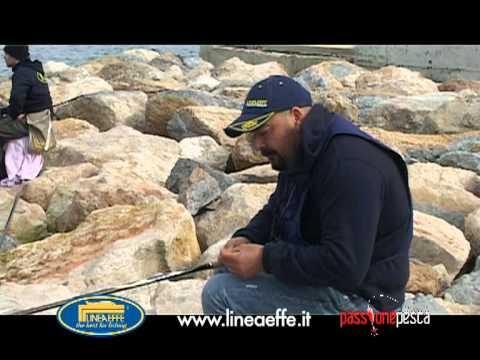pesca in porto lineaeffe