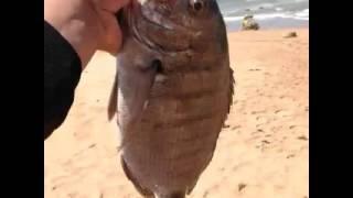 getlinkyoutube.com-افضل أوقات لصيد السمك بالقصبة
