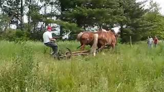 getlinkyoutube.com-Tillers International Farming with Oxen and Horses Class