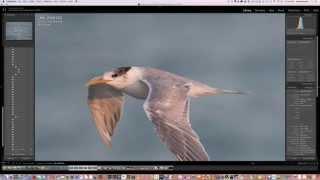 getlinkyoutube.com-Sigma 150-600 f5-6.3 DG OS HSM / C Lens review by Dewald Kirsten