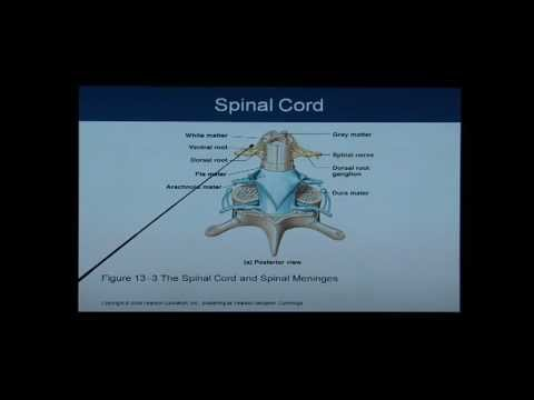 Anatomy and Physiology Chapter 13 Spinal Cord: Anatomy and Physiology Help