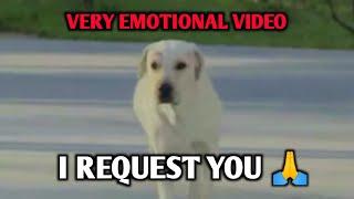 Yara Teri Yari Ko Video song with Boy And Dog