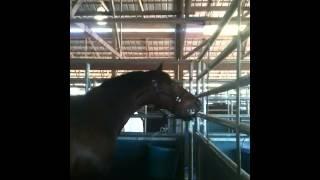 getlinkyoutube.com-One angry horse