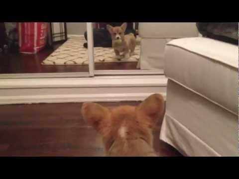 Prvi susret s ogledalom :)