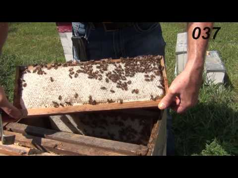 Beekeeping Means Knowing When To Harvest The Honey