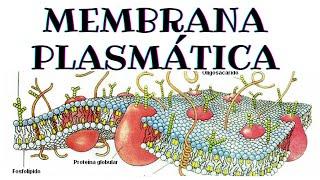 getlinkyoutube.com-Membrana plasmática - Biología