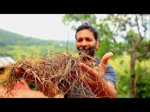 India: The Power of Pine Needles