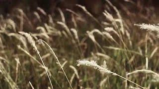 getlinkyoutube.com-Rintihan Kalbu -  Qalam Band ft Rafidah Ibrahim (Official Music Video)