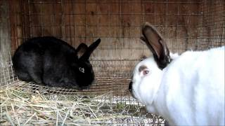 getlinkyoutube.com-Rabbit update 2-16-13