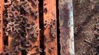 Загинал пчелен кошер