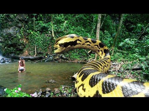 Dev Yılanlar   HD National Geographic Belgesel film Türkçe Dublaj en yeni belgesel