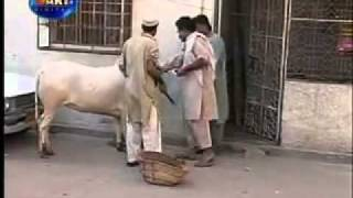 getlinkyoutube.com-Dailymotion   Pakistani Funny Video  3    a Funny video rel page 2 rel page 2