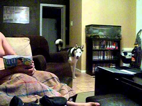 Pas se plaši Džulije Roberts