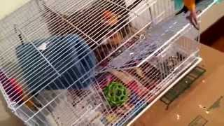getlinkyoutube.com-conure care ❤️ and sorry for the last part of the video . I didn't get to finish