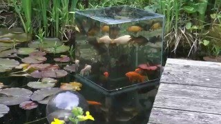 getlinkyoutube.com-Building a FishTower in the Pond