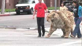 getlinkyoutube.com-Saber-toothed cat struts down Wilshire Blvd in L.A. and comes home to the Tar Pits!