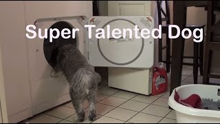 Talented Dog can do anything!