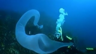 Unidentified Glowing Object: Nature's Weirdest Events - Series 3 Episode 2 - BBC Two