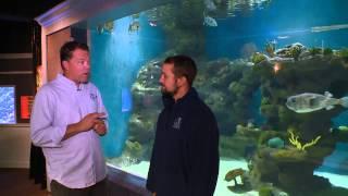 getlinkyoutube.com-Greater Cleveland Aquarium on Blue Zoo TV pres by Hikari feat. Fluval