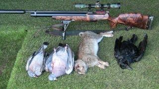 getlinkyoutube.com-Airgun Hunting Pigeons plus bonus Rabbit+Crow