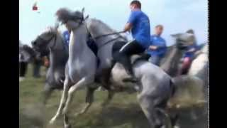 getlinkyoutube.com-Kad se konj žerav uplaši , evo rusvaja!!!