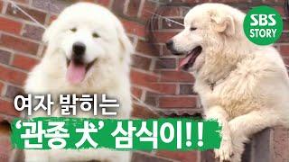 getlinkyoutube.com-TV 동물농장 463회_02