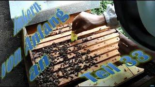 Imkern von Anfang an - Teil 33 - Königin austauschen in einem Bienenvolk