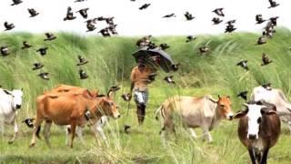 getlinkyoutube.com-আশরাফ উদাসের নতুন গান-কালারে তুই গেলে কোথায়